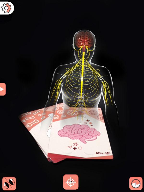 Body cards carta demo